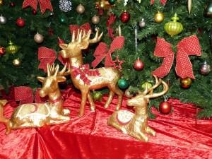 christmas-212546_640