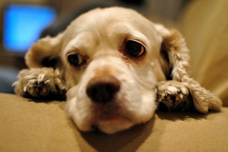 Sad Dog Middle Finger