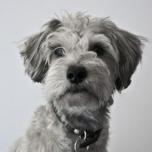 dog-508781_1280