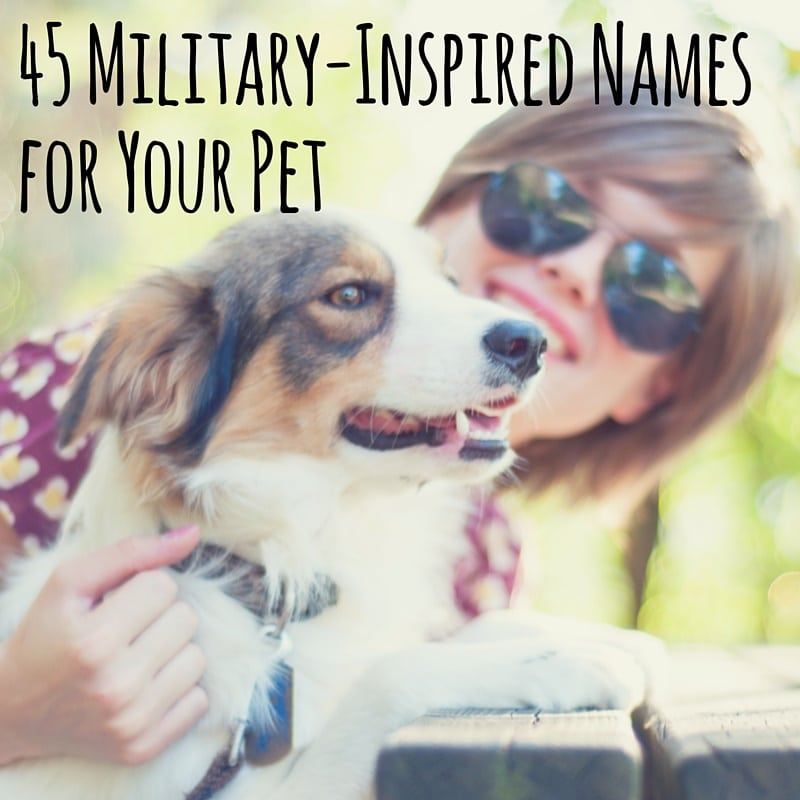 I've noticed a huge trend in naming family pets, whether they are furry, scaly or feathery, with military-inspired names.