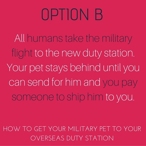 How to get your military pet to your new overseas military base