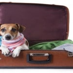 Why Moving Your Pet Overseas May Be a Pain