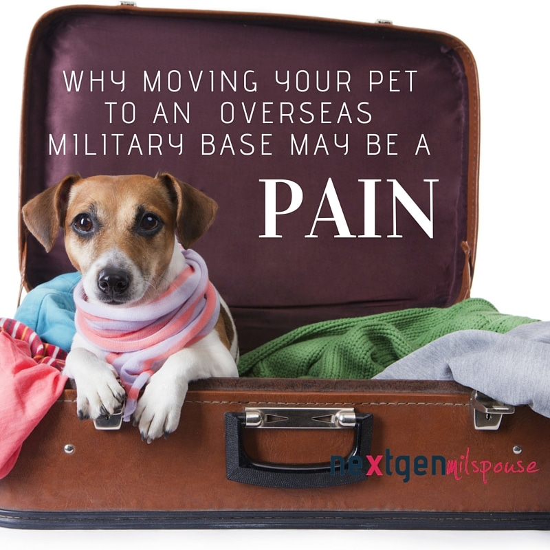What You Need to Know About Moving Your Pet to an Overseas Military Base