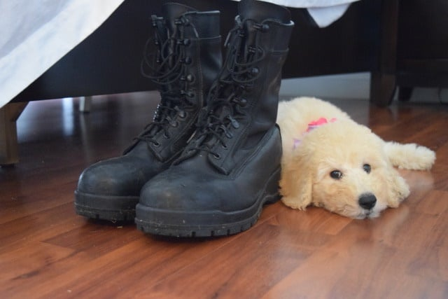 How My Goldendoodle Saved My Military Marriage