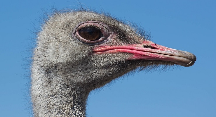 4 Money Management Tips from One Ostrich to Another