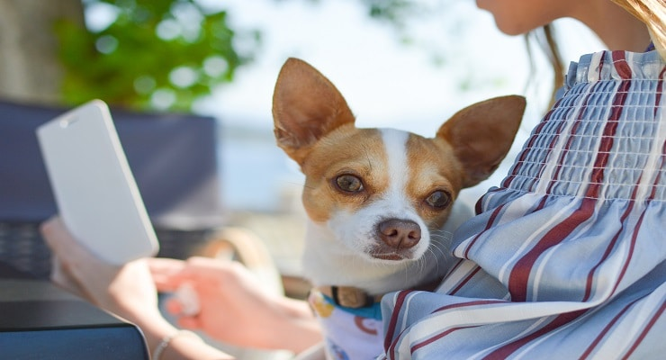 The Smart Military Spouse's Guide To PCSing with Pets